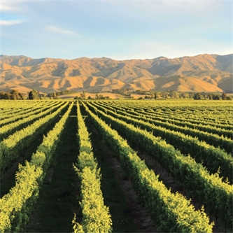 Hort sector rides fresh boom times