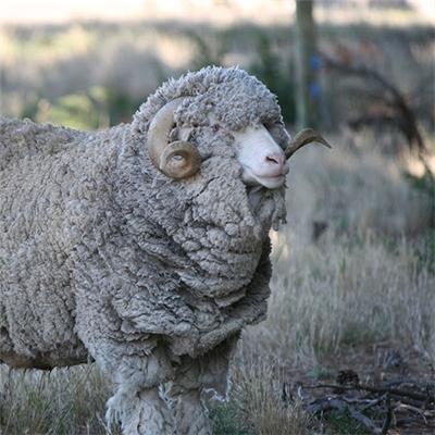 Otago-winner